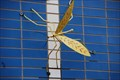Image for Mosquito and Dragonfly at The Frog Hut - Wellsboro, PA