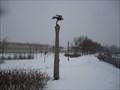 Image for Pigeon biset - Québec, Canada