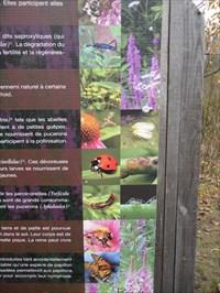Vue photo des insectes en rapport aux matériaux et son numéro.