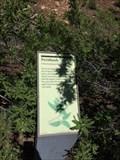 Image for Fernbush - Flagstaff, AZ