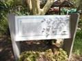 Image for Acacia Thorns  -  Escondido, CA