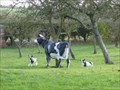 Image for Cow and Calves - Highfield House, Graze Hill, Ravensden, Bedfordshire, UK