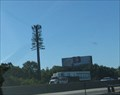 Image for Poorly Disguised Pine Tree, Milltown/South River, NJ