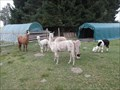 Image for Alpaca & Lamafarm in Waldsassen, BY, DE