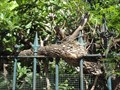 Image for Tree Eating Fence of Lutheran Church - Nice, France