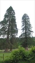 Image for Redwoods at Waterhead, Coniston, Cumbria