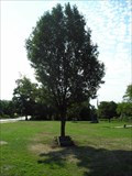 Image for POW/MIA Memorial Tree - Memorial Grove - Cherry Hill, NJ