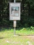 Image for Bald Eagles - Metaline Falls, Washington