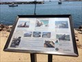 Image for Pinnipeds - Dana Point, CA