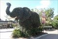 Image for Elephant Topiary  -  San Diego, CA