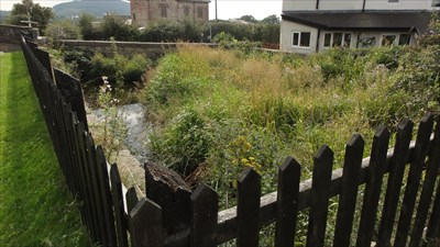 This pond is being used to attract wildlife into the area.