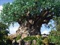 Image for The Tree of Life - Lake Buena Vista, FL