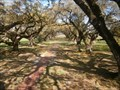 Image for Exceptional trees- Oak Alley plantation- Vacherie LA