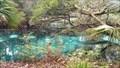 Image for Fern Hammock Springs - Ocala National Forest, FL