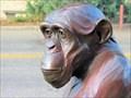 Image for Pondering Chimpanzee - Loveland, CO