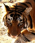 Image for Ranthambore National Park - Sway Madhopur, Rajasthan, India