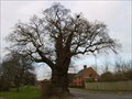 Image for The Baginton Oak - Baginton, Coventry, Warwickshire, UK