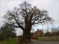 Image for The Baginton Oak - Baginton, Coventry, Warwickshire, UK