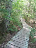 Image for Estivant Pines Nature Sanctuary Boardwalk - Copper Harbor, MI