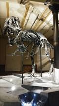 Image for T. Rex im Museum für Naturkunde - Berlin, Deutschland