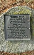 Image for Ontario Bicentennial White Pine - Guelph Ontario
