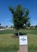 Image for Survivor Tree - Scissortail Park, Oklahoma City, OK