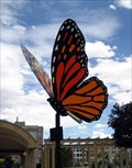 Image for Monarch Butterfly, Colorado Springs, CO