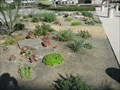 Image for Drought Tolerance Demonstration Garden - Fullerton, CA
