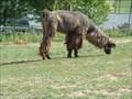 Image for Walnut Ridge Llama Farms - Greeneville, TN