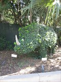 Image for Rhino Topiary - San Diego, CA