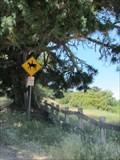 Image for Equestrian Crossing - Palo Alto, CA