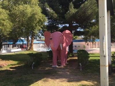 Pink Elephant, Pane 1, Las, Vegas, Nevada