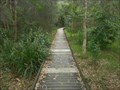 Image for Karuah Wetlands Boardwalk, NSW, Australia
