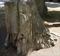 Image for Petrified wood  - Kassel, Hessen, Germany