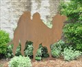 Image for Camel ~ Watertown, South Dakota