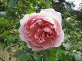 Image for Waddesdon Manor Rose Garden - Buckinghamshire, UK