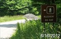 Image for Allegheny-Big Run Trailhead - Seneca Creek Backcountry - Monongahela National Forest - Circleville, West Virginia