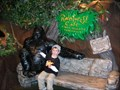 Image for Sit-by-me Gorilla at the Rainforest Cafe - Fisherman's Wharf, San Francisco