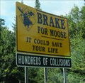 Image for Hundreds of Moose Collisions, New Hampshire