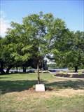 """Image for """"Freedom Summer"""" Memorial Tree - Memorial Grove - Pennsauken, NJ"""