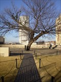 Image for Survivor Tree - Oklahoma City, OK