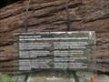 Image for Bergmammutbaum -  in der Sequoiafarm - Nettetal-Kaldenkirchen - NRW - Germany