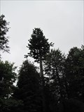 Image for Pine Tree Cell Tower
