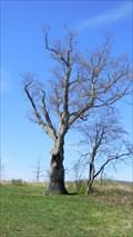 Image for The Devil's Tree - Basking Ridge, NJ