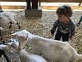Image for Lemos Farm Petting Zoo - Half Moon Bay, CA