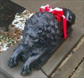 Image for (Lions) - Owego, NY
