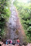 Image for Manoa Falls - Honolulu, Oahu, HI