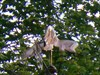 Photo avec angle différent de la girouette.  Photo with different angle of the vane.