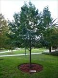 Image for Debra A. Doughty - Jacksonville, FL