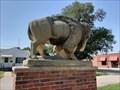 Image for Buffalo - Atwood, Kansas